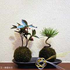 """盆栽・苔玉~春夏秋冬 • <a style=""""font-size:0.8em;"""" href=""""http://www.flickr.com/photos/60410788@N05/49016159836/"""" target=""""_blank"""">View on Flickr</a>"""