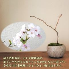 """盆栽・苔玉~春夏秋冬 • <a style=""""font-size:0.8em;"""" href=""""http://www.flickr.com/photos/60410788@N05/32266898407/"""" target=""""_blank"""">View on Flickr</a>"""